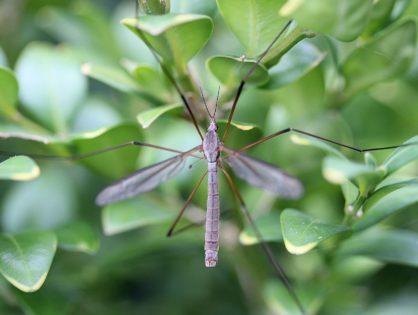 La prévention commune à toutes les maladies transmises par les moustiques